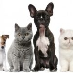 group-of-dogs-and-cats-in-front-of-white-background-560x350