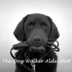 the-dog_walker-aldershot-logo-500px
