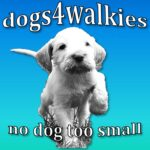 dogs4walkies logo