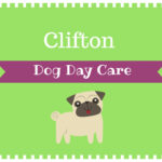 clifton-dog-day-care