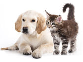 dog-and-cat-looking-after