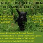 dog-walk-ad-re-online-ad